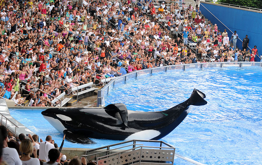 Seaworld Package deals on hotels, vacation homes, and more